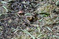 Frogs 09/01/12
